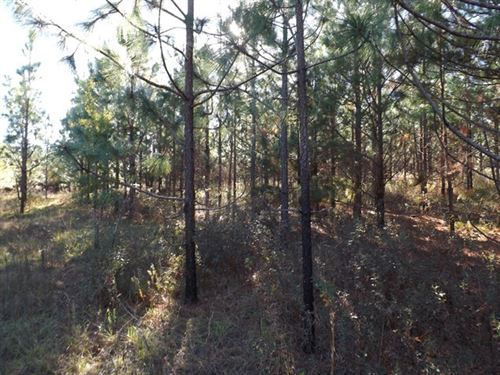 Land For Sale in Henry County, AL : Shorterville : Henry County : Alabama
