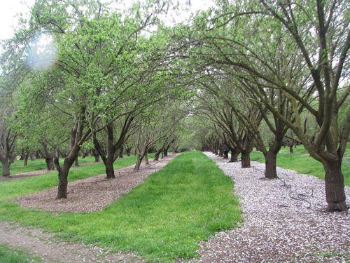 Esparto, Ca, Producing Almond : Esparto : Yolo County : California