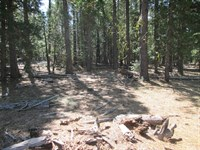 6 Wooded Acres Cal Pines Hill Unit : Alturas : Modoc County : California