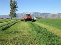 Modoc County Hay Ranch Farm 3 Homes : Cedarville : Modoc County : California