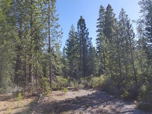 160 Acres, Timber/Views/Borders : Tionesta : Modoc County : California
