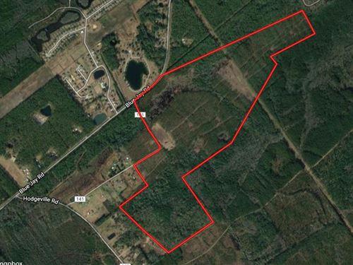 Development Acreage Effingham : Springfield : Effingham County : Georgia