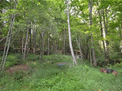 8.95 Acres, Gilmer Country, Talking : Talking Rock : Gilmer County : Georgia