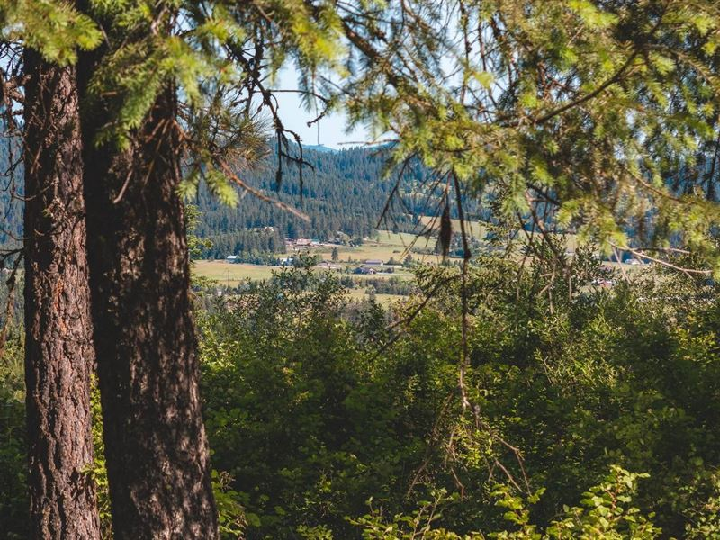North Idaho Acreage Coeur D'alene : Coeur D'alene : Kootenai County : Idaho