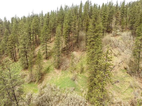 Timbered Acreage Within City : Orofino : Clearwater County : Idaho