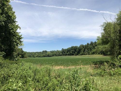 Wooded, Acreage, Creek, Metcalfe : Summer Shade : Metcalfe County : Kentucky