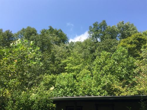 47 Acres Mostly Wooded Green River : Columbia : Adair County : Kentucky