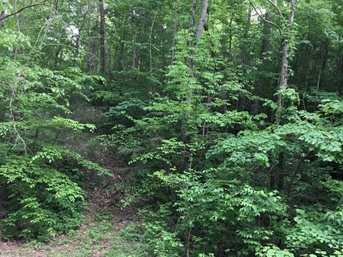 Land, Burkesville, Kentucky : Burkesville : Cumberland County : Kentucky