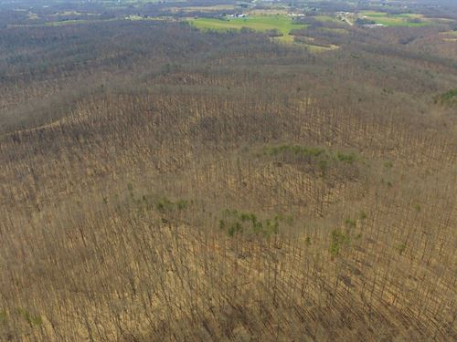 97 Acres, Approx, 14 Acres Cleared : Dunnville : Casey County : Kentucky