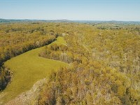 New Video, Off Grid, Farm Woodland : Liberty : Casey County : Kentucky