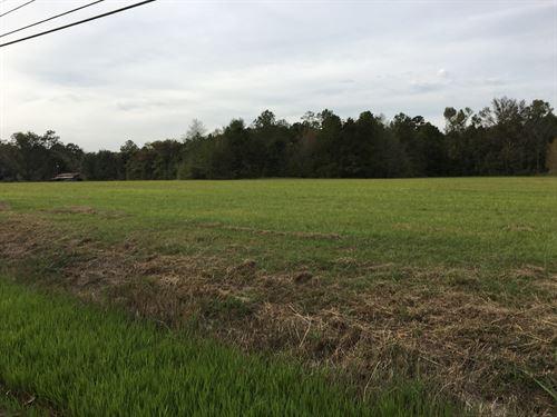 1.5 Acre Homesite Outside City : Ponchatoula : Tangipahoa Parish : Louisiana