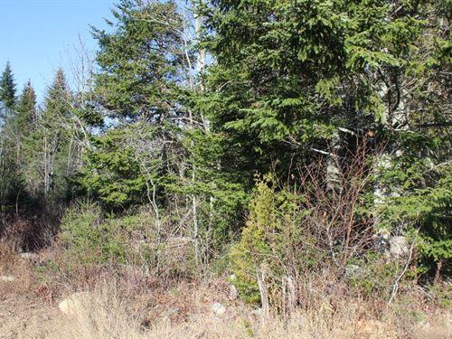 Maine Land For Sale in Cutler : Cutler : Washington County : Maine