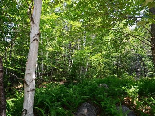 Maine Land For Sale in Howland : Howland : Penobscot County : Maine