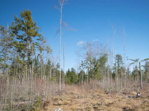 Maine Land For Sale in Medford : Medford : Piscataquis County : Maine
