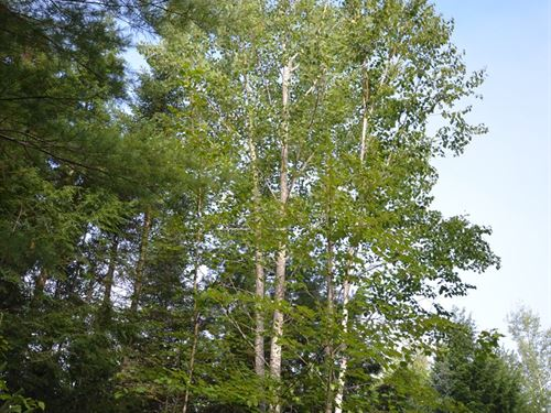 Maine Land For Sale in Milford : Milford : Penobscot County : Maine