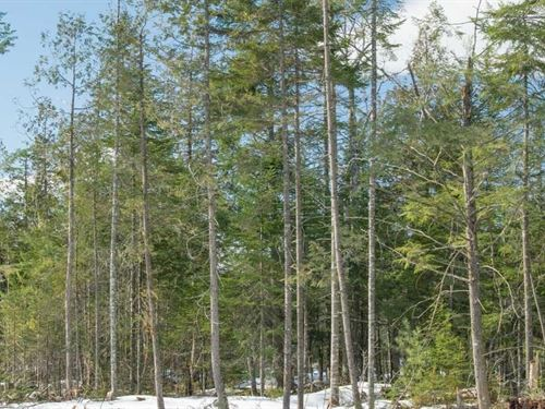 Maine Land For Sale in Palmyra : Palmyra : Somerset County : Maine