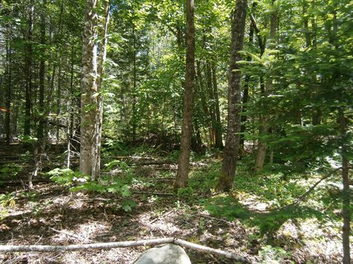 Maine Land For Sale in Springfield : Springfield : Penobscot County : Maine