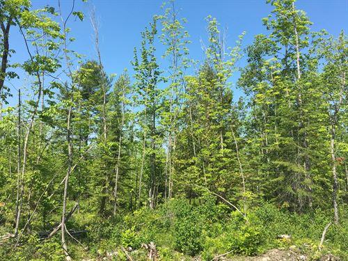 Maine Land For Sale in Troy : Troy : Waldo County : Maine
