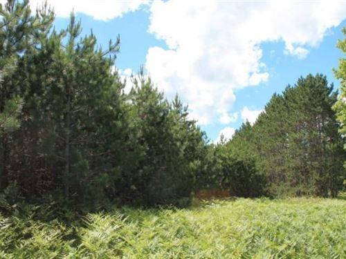 38 Acres For Sale, Atlanta Mi : Atlanta : Montmorency County : Michigan