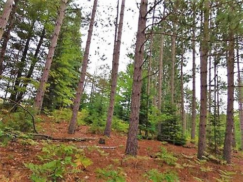 .50 Acre Hunting Property Atlanta : Atlanta : Montmorency County : Michigan