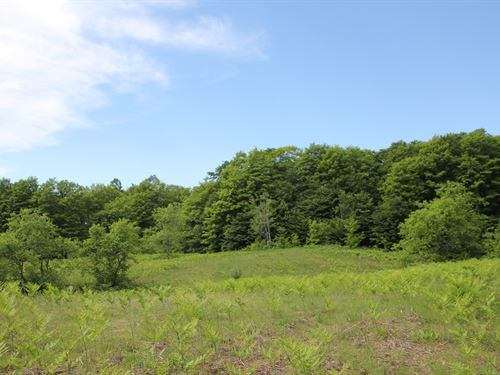 Vacant Land, 120 Acres Elmira : Elmira : Antrim County : Michigan