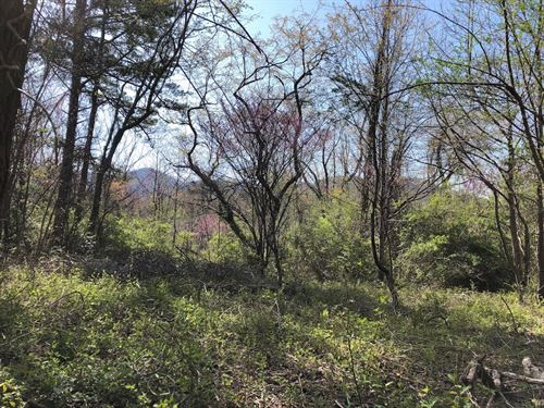 Lot Elk Mtn Scenic Hwy Asheville NC : Asheville : Buncombe County : North Carolina