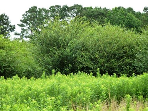 Secluded Development Land, Quinn : Beulaville : Duplin County : North Carolina