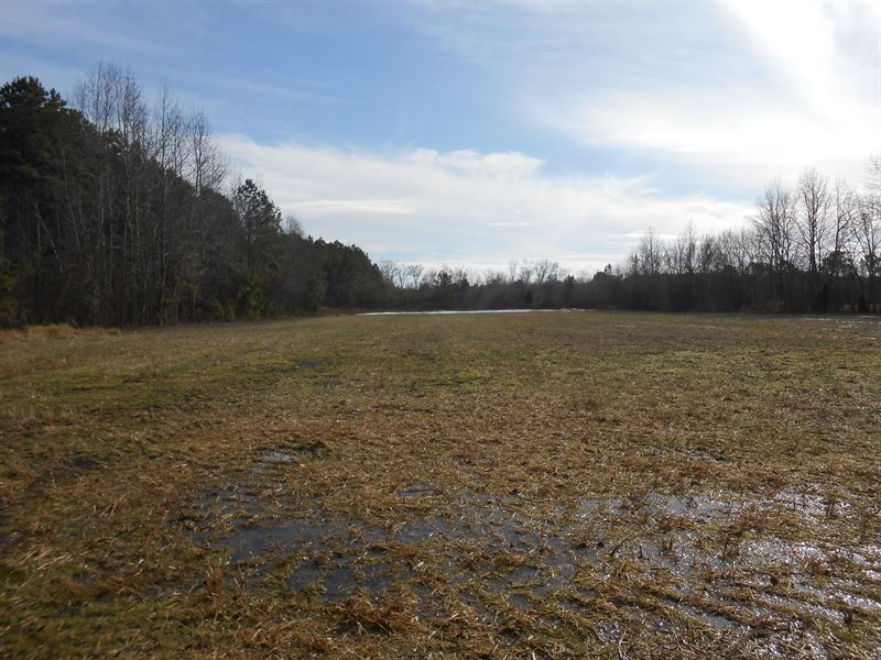 Hunting Tract Beaufort Co, NC : Land for Sale : Chocowinity