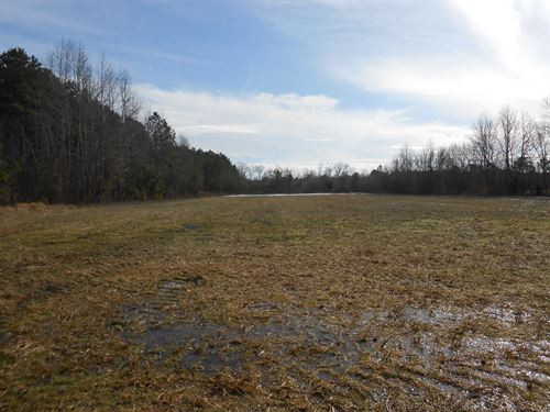 Hunting Tract Beaufort Co, NC : Chocowinity : Beaufort County : North Carolina