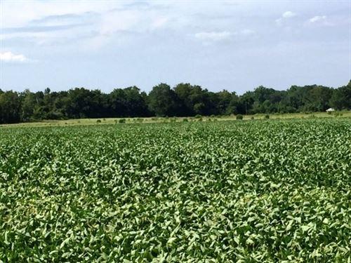 Farm Land, Old Fayetteville Rd Hwy : Garland : Bladen County : North Carolina