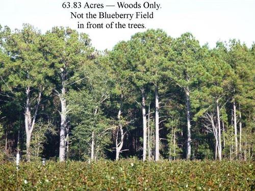 Timber Tract, Bull St, Garland : Garland : Bladen County : North Carolina