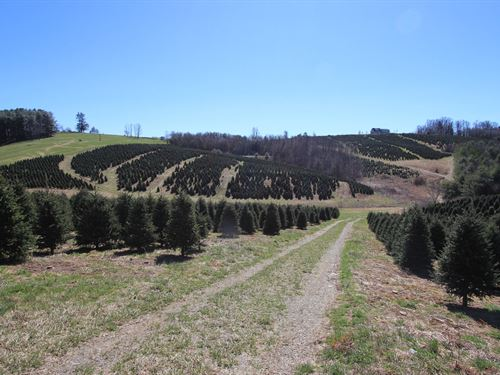 Blue Ridge Mountain Farm : Glade Valley : Alleghany County : North Carolina