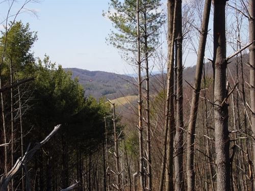 Partially Wooded Hunting Tract : Laurel Springs : Alleghany County : North Carolina