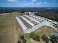 Turkey Farm in Union County NC : Monroe : Union County : North Carolina