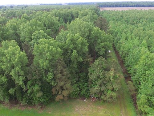Nc 1000 Acre Timber Tract Beaufort : Pantego : Beaufort County : North Carolina