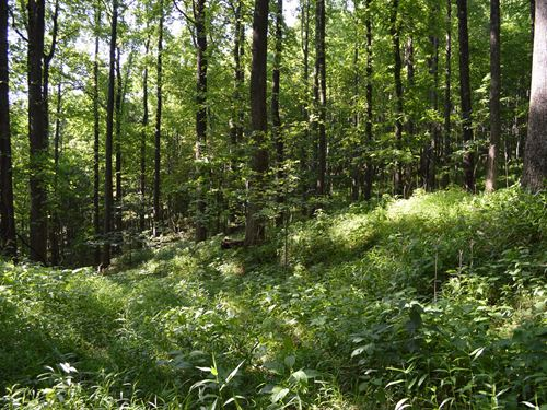 Gorgeous Mountain Tract Potential : Roaring Gap : Alleghany County : North Carolina