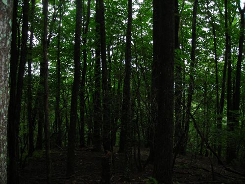 Wooded Lot in Gated Community : Sparta : Alleghany County : North Carolina