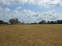 Farm Washington, NC Great Horses : Washington : Beaufort County : North Carolina