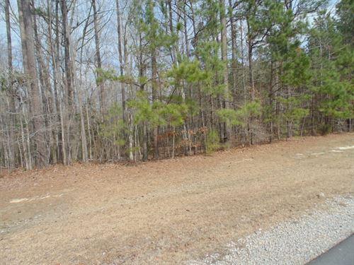 Close To Chowan River : Winton : Hertford County : North Carolina