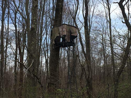 Woodsfield, Monroe County OH 83.25 : Woodsfield : Monroe County : Ohio