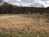 Wooded Land : Locust Grove : Mayes County : Oklahoma