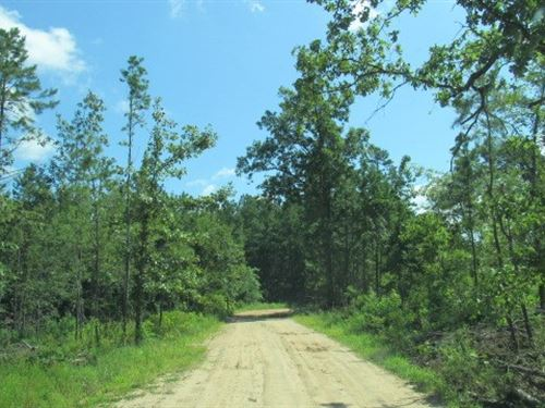 20 Acres Hunting Land Spencerville : Spencerville : Choctaw County : Oklahoma