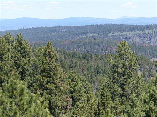 Burns, Timbered Parcel Northeast : Burns : Harney County : Oregon