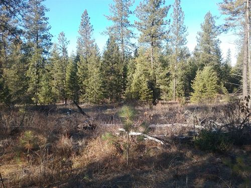 Acreage Near Deer Lake Washington : Loon Lake : Stevens County : Washington