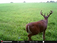 Spectacular Hunting & Farmland : Highland : Iowa County : Wisconsin