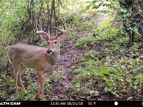 Premium Hunting Property : La Valle : Richland County : Wisconsin