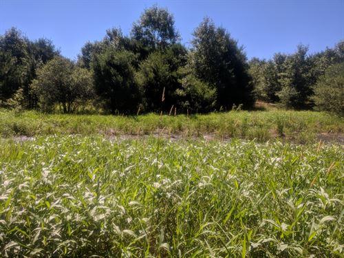 Hunting Land For Sale Wautoma, WI : Wautoma : Waushara County : Wisconsin