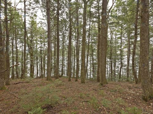 Maine Lakefront Land in Lakview : Lakeville : Penobscot County : Maine