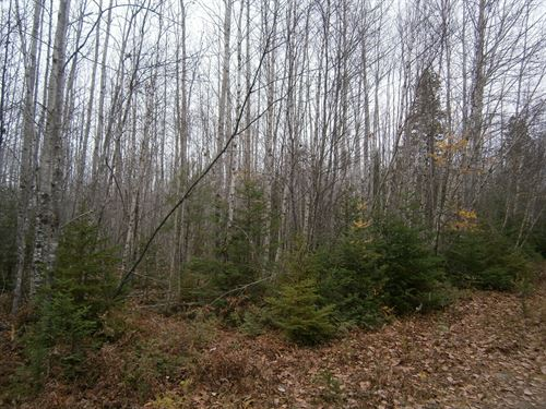 Maine Land For Sale in Webster Plt : T3r9 Nwp : Penobscot County : Maine