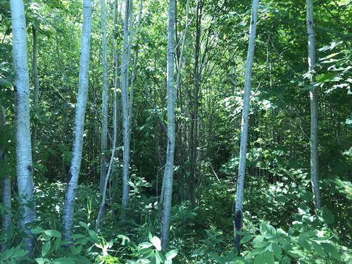 Woodspur Road, 40 Acres : Rockland : Ontonagon County : Michigan